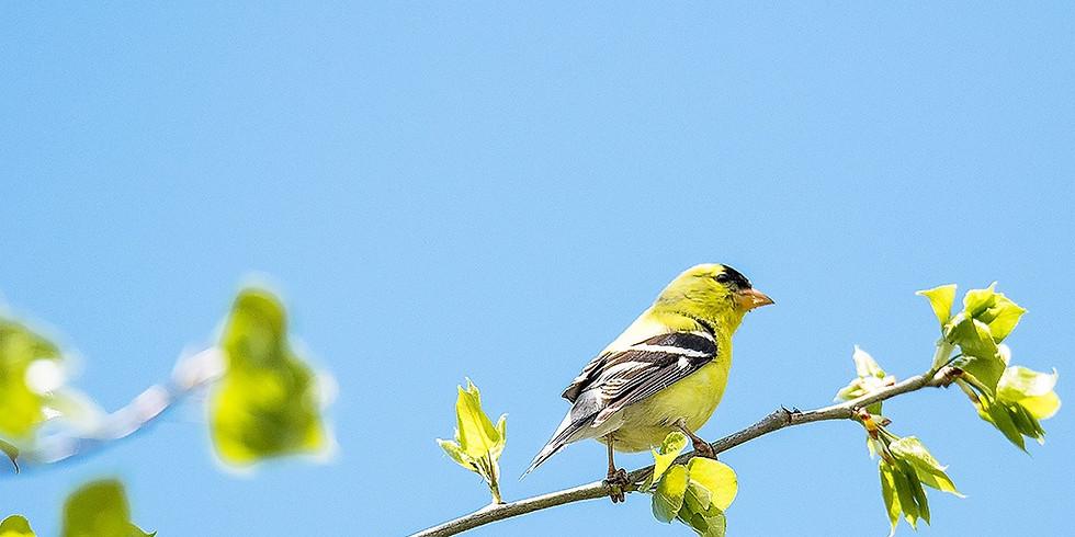 Bird-Friendly Landscapes