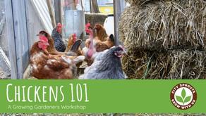 Chickens 101 Workshop