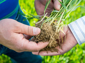 Ask Aaron: Give Your Soil a Break