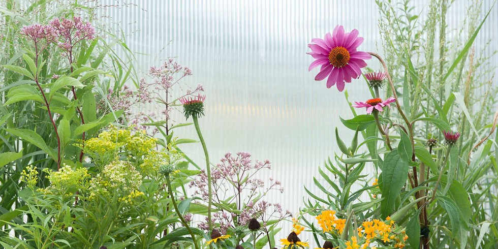 Native Plantings for the Landscape