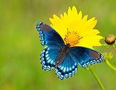 butterfly.jpg.990x0_q80_crop-smart.jpg