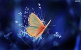 585705565-butterfly-wallpapers-free.jpg