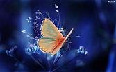 585705565-butterfly-wallpapers-free.jpg