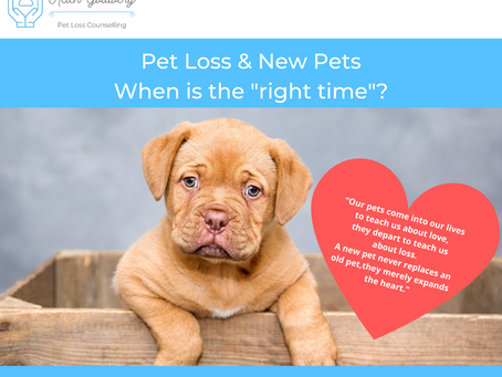 "Pet Loss & New Pets ~ When is the ""right time""?"