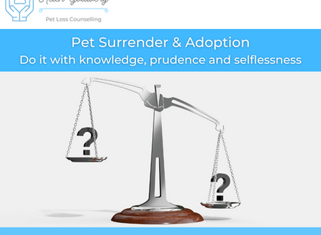 Pet Surrender and Adoption: Do it with knowledge, prudence and selflessness