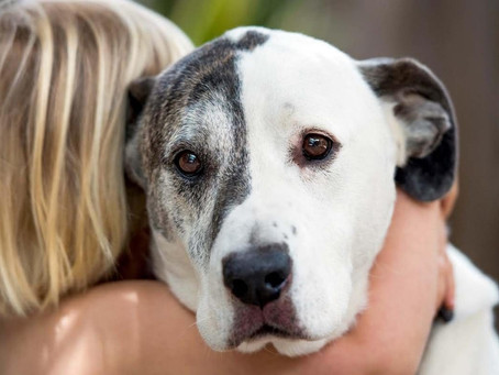 What to say & what NOT to say to a child who has lost their pet