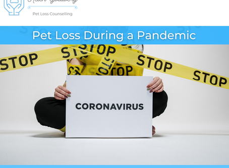 Pet Loss During a Pandemic