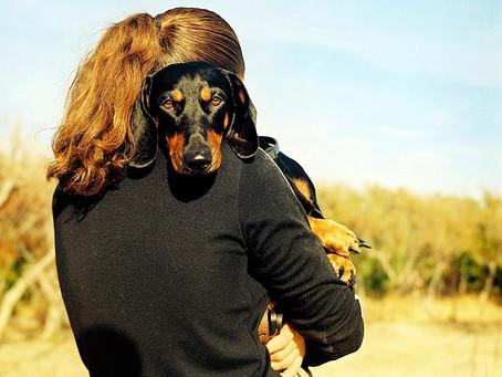 Thank a foster (animal) parent!