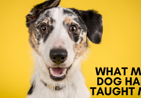 What My Dog Has Taught Me