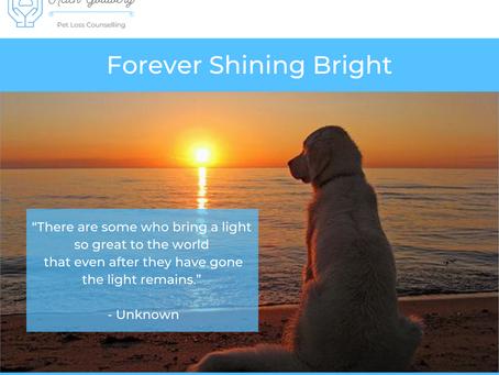 Forever Shining Bright