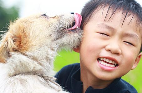 Series alert: Children & Pet loss