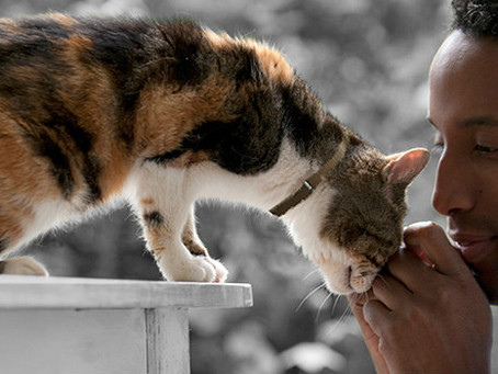 Pets teach us about peace, joy, and living