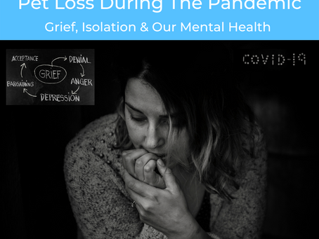Pet Loss During the Pandemic: Grief, Isolation and Our Mental Health