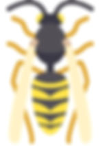 wasp icon_edited.jpg