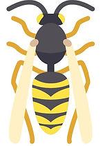 wasp icon_edited.jpg