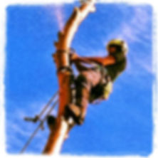 Climbing arborist Jonathan Cox
