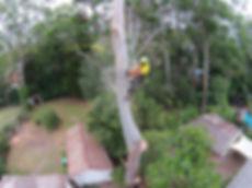 J.C. Tree Managemrn tree removal