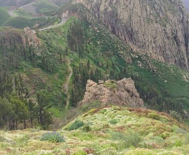 Plant spotting in La Gomera