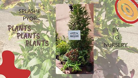 Copy of PLANTS.png