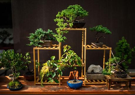 Selection of Bonsai Trees