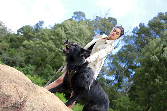 Family protection dogs, Personal Protection dogs
