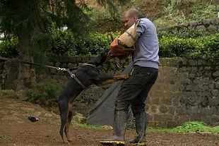 Doberman India. Doberman Protction Dogs.