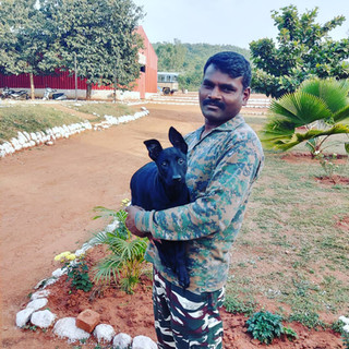Police puppies India