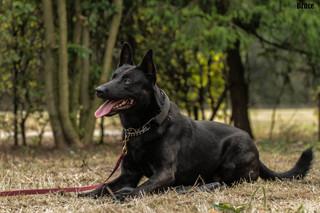 Bruce Defender Dogs