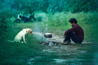 Dogs for films