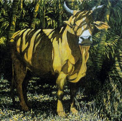 Bull in Coco Grove