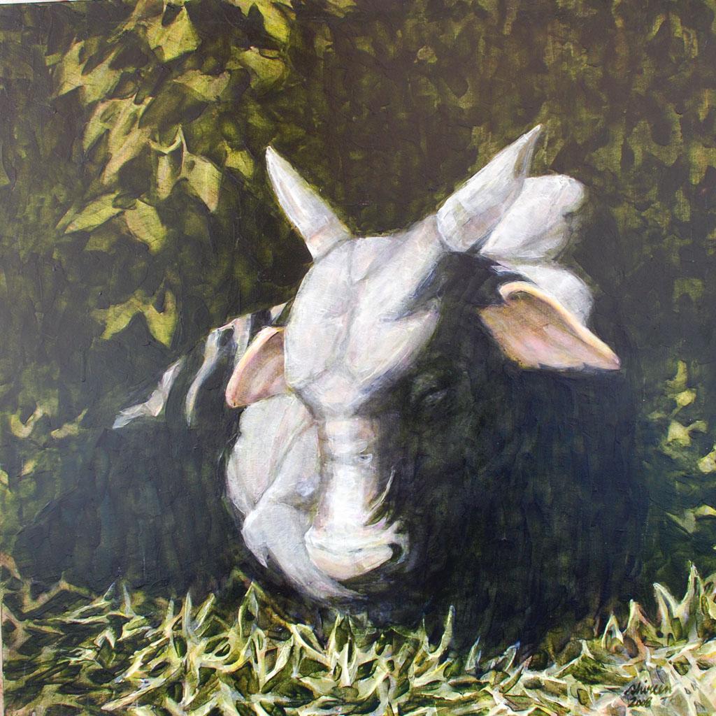 Black Bull in Shadow