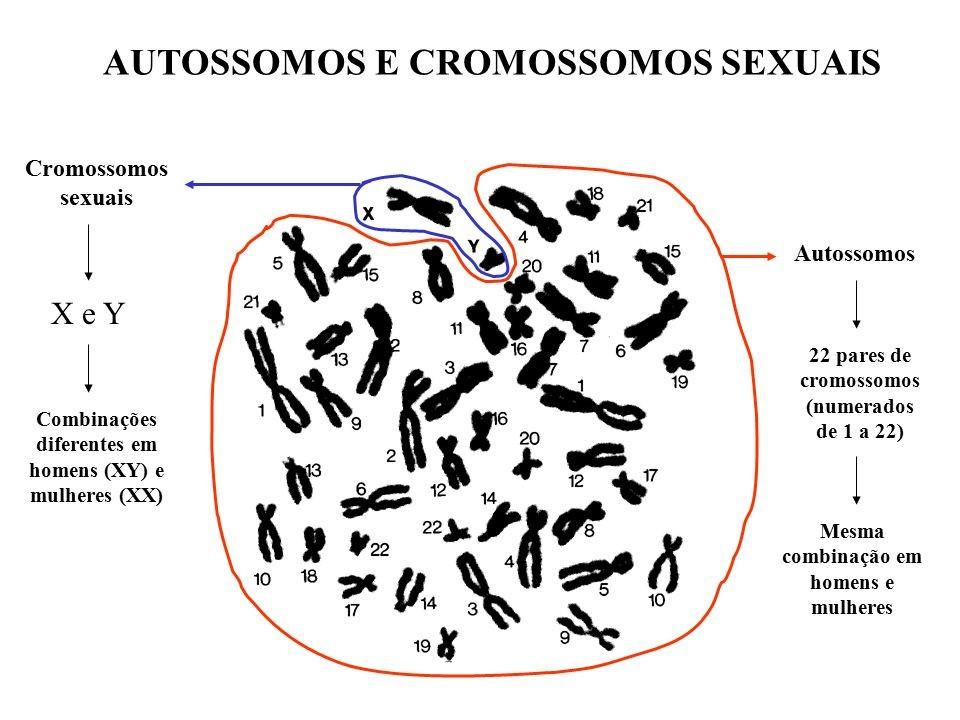Cariótipo humano masculino típico, com 44 cromossomos autossômicos e os cromossomos sexuais X e Y, representando a visualização ao microscópio.
