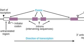 Do que é feito um GENE?
