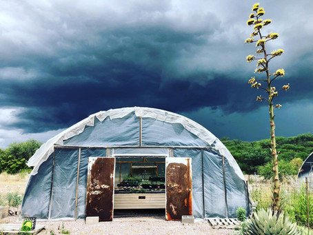 Monsoon Gardening for Pollinators