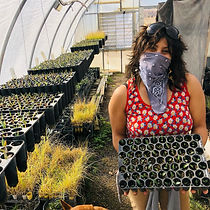 volunteer with agave and grasses.jpg