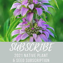 Copy of Subscription Graphic for Social