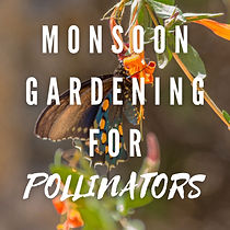 Monsoon Gardening for Pollinators.jpg