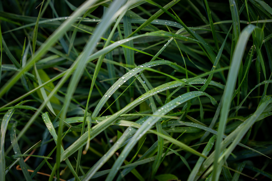 Mukilteo Grass_2-1.jpg