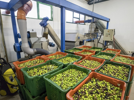 """""""Spiegel plus"""": Die Tricks der Olivenöl-Mafia"""