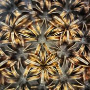 Kaleidoscope Bank