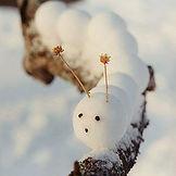 Снежколеп весёлые зверюшки