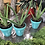 Thumbnail: Potted Indoor Plant