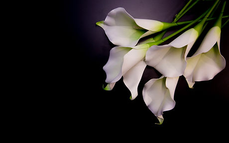 Lily flowers on the dark background plac