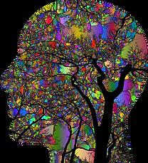 brain-4866447_1280.png