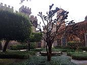 Castello Lancelotti albero.jpg