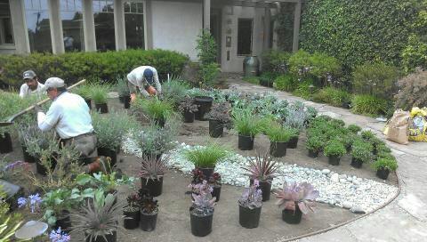 Converting Lawn into a garden