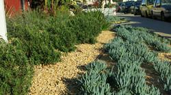 Waterwise plants and ground cover