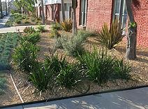 Low Maintenance Landscape