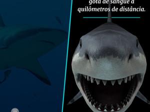Tubarões sentem cheiro de sangue?