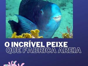 O incrível peixe que fabrica areia